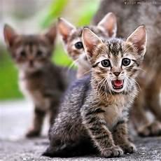 Gambar Dan Meme Lucu Gambar Kucing Lucu Galau