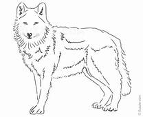 Photos Wolf Drawings In Pencil Easy  Art Gallery
