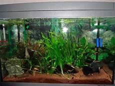 60 liter becken tetra aquaart kleinanzeigen tiermarkt deine tierwelt de