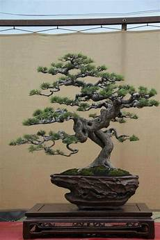 Bonsai Baum Kaufen - pin by d ichiro on bonsai trees japanese bonsai tree