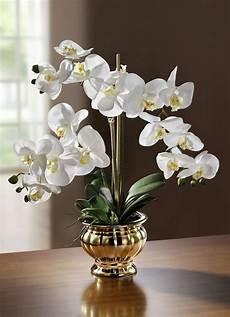 Kunst Orchidee Im Topf - orchidee im topf kunst textilpflanzen bader