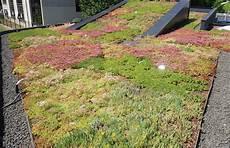 toit terrasse vegetal toit v 233 g 233 talis 233 producteur de v 233 g 233 talisation de toitures