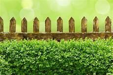 die hecke natuerlicher zaun und sichtschutz im garten zaun oder hecke
