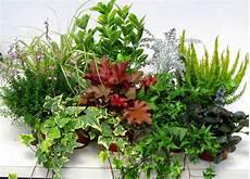Balkonpflanzen Set F 252 R Balkonk 228 Sten 100 Cm Lang Pflanzen