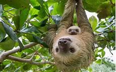 celebrate world wildlife day with these baby animals travel leisure