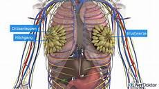 Brustschmerzen Mastodynie Beschreibung Netdoktor De