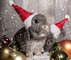 303 best rabbit breeds bunnies bunny decor crafts images pinterest