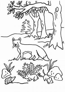 Ausmalbilder Igel Wald Ausmalbild F 252 Chse Fuchs Igel Hase Und Maus Kostenlos