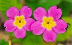 blumen klein flower wallpaper wallpapersafari