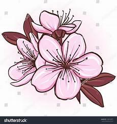 fleur de cerisier dessin cherry blossom decorative floral illustration stock