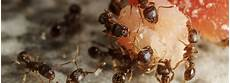 Was Tun Gegen Ameisen Erfahren Was Bei Einer