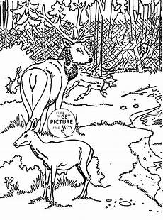 free coloring pages for zoo animals 17390 50 coloring pages of zoo animals free coloring pages of zoo animals cutouts radiokotha