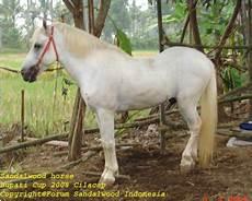 Kuda Sandelwood Ethnic Sumba