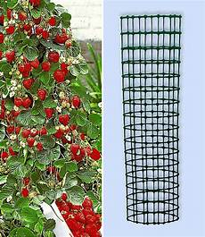kletter erdbeere hummi 174 und dekorativer rankturm 1 set