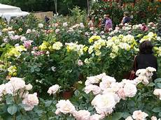 di masino fiori crazyvalsusa la tre giorni dei fiori al di masino