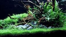 ada aquascape aquascape ada 90p a come true update 70 days