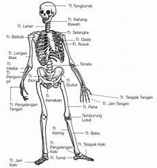 Fungsi Tulang Rangka Jumlah Tulang Nama Tulang Dan