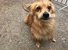 spa mulhouse chien canin sans famille petits canins 224 l adoption