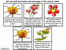 the life cycle of a flowering plant powerpoint and worksheet plant science planting flowers