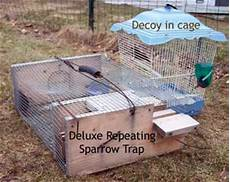 house sparrow trap plans tell a how to make chicken coop predator proof venpa