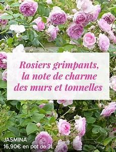 rosiers grimpants anciens notre gamme de rosiers anglais anciens 224 grandes fleurs
