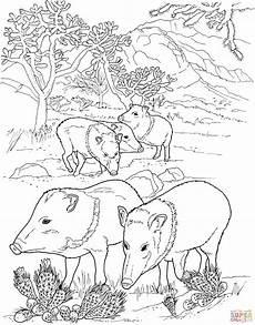 javelina peccaries pigs coloring mit bildern