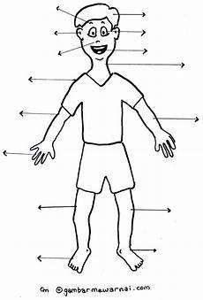 Mengenal Anggota Tubuh Gambar Bagian Tubuh Gambar Tubuh