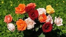 Menakjubkan 30 Gambar Bunga Mawar Untuk Undangan Galeri