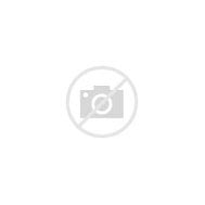 Image result for amazing animal alphabet book