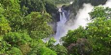 6 Fakta Menakjubkan Tentang Hutan Si Paru Paru