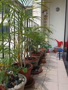 Sichtschutz F 252 R Den Balkon Varianten Aus Holz Pflanzen