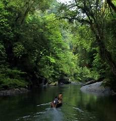 8 Foto Hutan Indonesia Yang Asri Dan Eksotis Page 2 Kaskus
