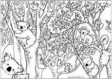 australia animals coloring pages 16900 56 best australia for images on aboriginal aboriginal culture and