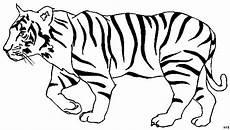 eleganter tiger ausmalbild malvorlage tiere