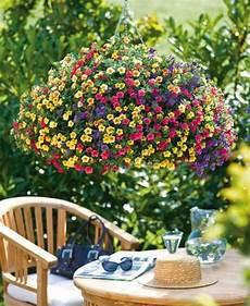 plantes retombantes vivaces ou fleurs retombantes pour un