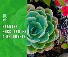 plante succulente entretien 5 plantes grasses 224 d 233 couvrir crassula sedum haworthia