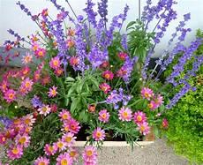 pflanzen für bienen und schmetterlinge best of handreichungen zu balkonk 228 sten f 252 r bienen
