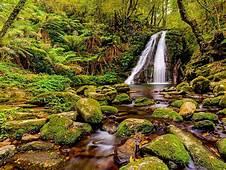 Gondwana Rainforests Australia Jungle Lush Green