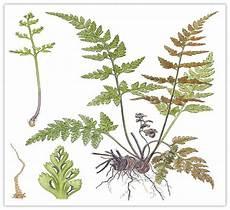 Dunianya Sari Kingdom Plantae Dunia Tumbuhan Part 1