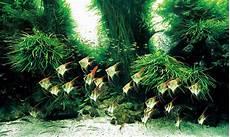 ada aquascape the world s largest nature aquarium project takashi amano