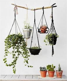 le pour plante 18550 suspension pour plante questions r 201 ponses vid 233 o mademoiselle claudine le