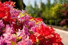fiera dei fiori isola d asti fiera dei fiori 2014 eventi langhe
