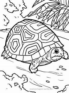 Ausmalbilder Reptilien Malvorlagen Die Besten 25 Kostenlose Malvorlagen Ideen Auf