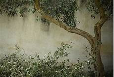 olivenbaum schneiden anleitung f 252 r den richtigen r 252 ckschnitt