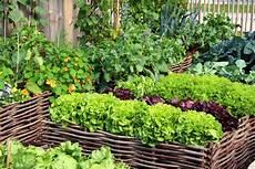hochbeete selber bauen und bepflanzen summer gardening guide how to create an organic vegetable