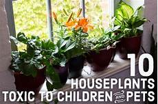 giftige zimmerpflanzen baby 10 toxic houseplants that are dangerous for children and