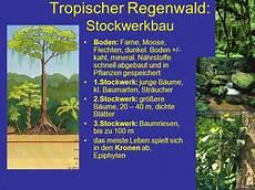 rötlicher boden in den tropen r 246 tlicher boden in den tropen wiederaufforstung