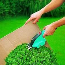 buchsbaum schneiden wann am besten die 25 besten buchsbaum schneiden ideen auf