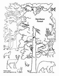 coloring pages animals in the forest 17029 deciduous forest with animals coloring page