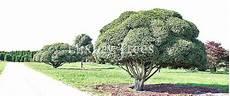 baeume im garten zierde und sichtschutz 187 luxurytrees 174 schweiz